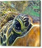 Turtle Eye Canvas Print
