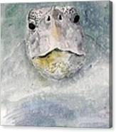 Turtle Face Canvas Print