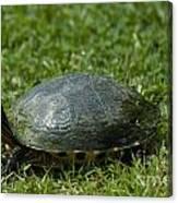 Turtle Grass Canvas Print