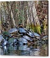 Turtle Landing Canvas Print