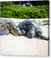 Turtle Lovin Canvas Print