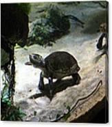 Turtle - National Aquarium In Baltimore Md - 121218 Canvas Print