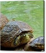 Turtle Ninjas Canvas Print