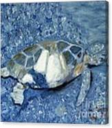 Turtle On Black Sand Beach Canvas Print