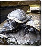 Turtle Rant Canvas Print