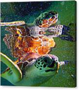 Turtle Reflection Canvas Print