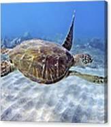 Turtle Underwater 3 Canvas Print