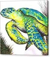 Turtle Wonder Canvas Print