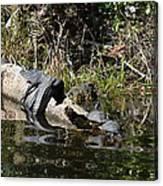 Turtles And Gator Canvas Print