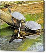 Turtles At The National Zoo Canvas Print