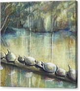 Turtles On A Log Canvas Print
