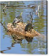 Turtles On Stump Canvas Print