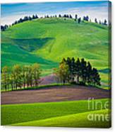 Tuscan Palouse Canvas Print