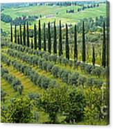 Tuscan Panoramic 3 Canvas Print