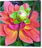 Tutu Dancer Flower Canvas Print
