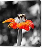 Tweedle Bumble And Tweedle Bee Canvas Print