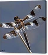 Twelve-spotted Skimmer Canvas Print