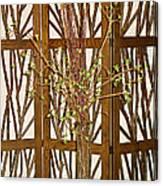 Twigs On Twigs Canvas Print