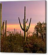 Twilight After Sunset In The Cactus Forests Of Saguaro National Park Canvas Print