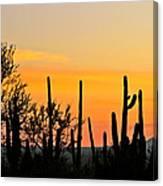 Twilight After Sunset Sonoran Desert Canvas Print