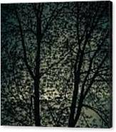Twilight Colors  Canvas Print