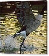 Twilight Goose I Canvas Print