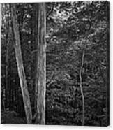 Twilight Woods #1 Canvas Print