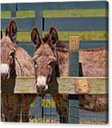 Twin Donkeys Canvas Print