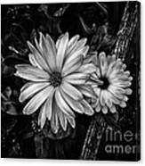 Twin Flowers And A Branch  Canvas Print