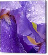 Twin Iris Canvas Print