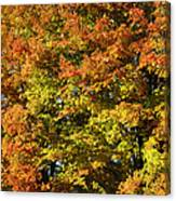 Twin Maples Canvas Print
