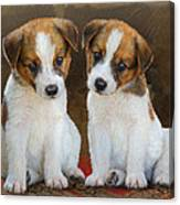 Twin Puppies Portrait Canvas Print