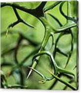 Twisted 2 Canvas Print