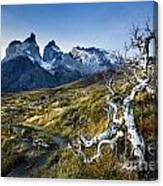 Twisted Tree And Trail Canvas Print