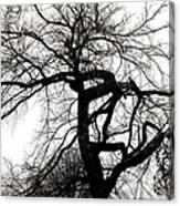 Twisted Tree In Black And White Canvas Print