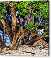 Twisted Trunks Canvas Print