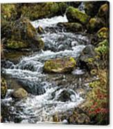 Twisted Waters Canvas Print