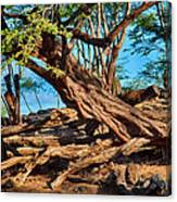 Twisting Trees Canvas Print