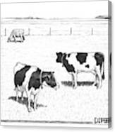 Two Spotted Cows Looking At A Jersey Cow Canvas Print