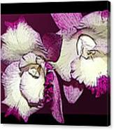 Two Baby Orchids Canvas Print