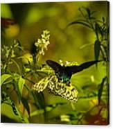 Two Beautiful Creations Canvas Print