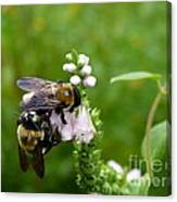 Two Bees On Flower Canvas Print