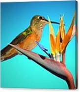 Two Birds Of Paradise Canvas Print
