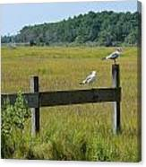 Two Birds On A Fence Canvas Print