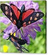 Two Black And Red Butterflies Canvas Print