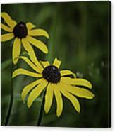 Two Black Eyes On The Macomb Orchard Trails Canvas Print