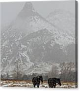 Two Black Horses In The Snow   #7983 Canvas Print