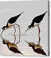 Two Black Neck Stilts Eating Canvas Print