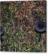 Two Black Stools Canvas Print