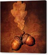 Two Brown Acorns Canvas Print